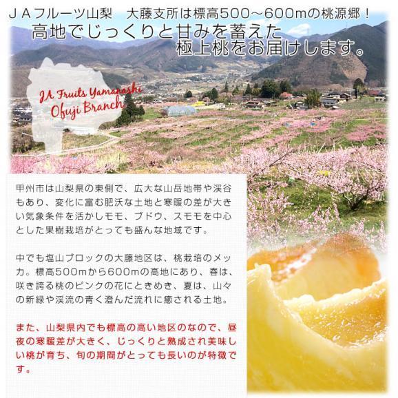 山梨県より産地直送 JAフルーツ山梨 大藤支所 大藤の桃 約5キロ (13から16玉) 桃 Peach もも04