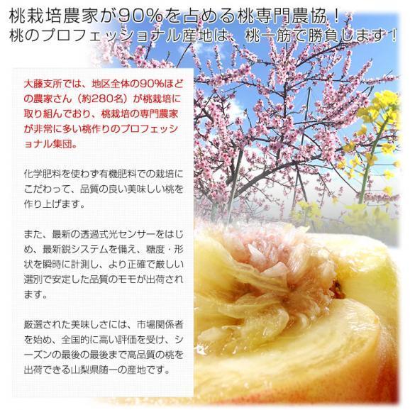 山梨県より産地直送 JAフルーツ山梨 大藤支所 大藤の桃 約5キロ (13から16玉) 桃 Peach もも05