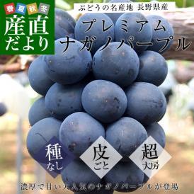 送料無料 長野県産 ナガノパープル プレミアムな大房限定600g×3房 市場発送