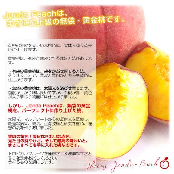 送料無料 山形県より産地直送 JAさくらんぼひがしね 大富支所 究極の黄金桃 ジョンダピーチ 約3キロ (9玉から12玉) 桃 モモ もも05