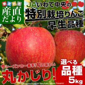 送料無料 岩手県より産地直送 JAいわて中央 特別栽培リンゴ <早生品種> 5キロ (14から23玉)林檎 りんご