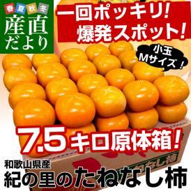 送料無料 和歌山産 JA紀の里 たねなし柿 小玉Mサイズ 7.5キロ 40玉
