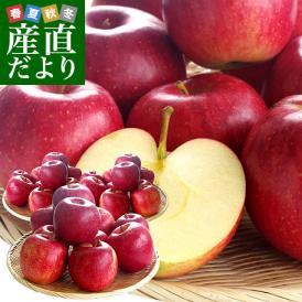 山形県より産地直送 山形朝日町APPLE'S 秋陽りんご 約9から10キロ 林檎 リンゴ 送料無料