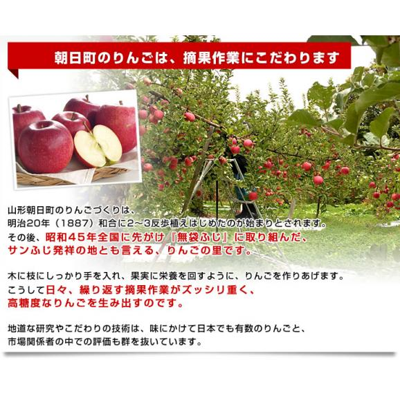山形県より産地直送 山形朝日町APPLE'S 秋陽りんご 約9~10キロ 林檎 リンゴ 送料無料05
