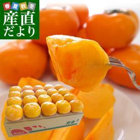 送料無料 和歌山県より産地直送 JA紀の里 たねなし柿 2LからMサイズ 3.75キロ(16玉から20玉) カキ かき 柿