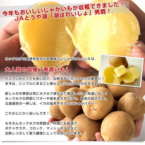 北海道より産地直送 JAとうや湖 じゃがいも 湖ばれいしょ「男爵」 Mサイズ 10キロ 馬鈴薯 ジャガイモ  送料無料04
