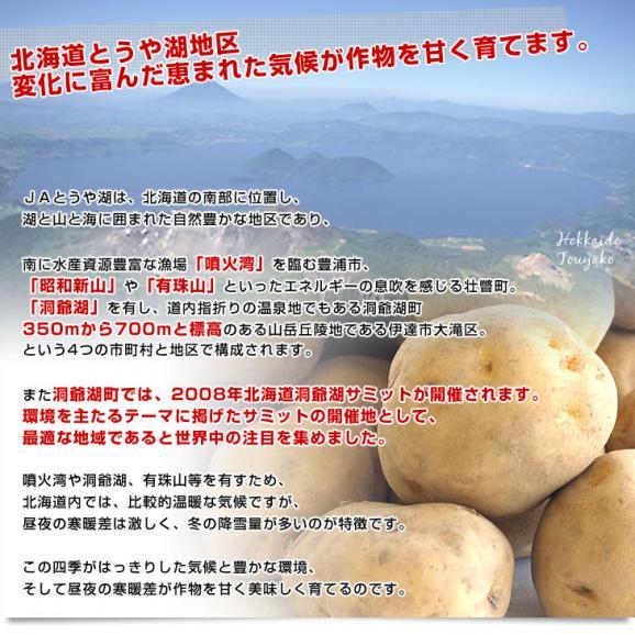 北海道より産地直送 JAとうや湖 じゃがいも 湖ばれいしょ「男爵」 Mサイズ 10キロ 馬鈴薯 ジャガイモ  送料無料05