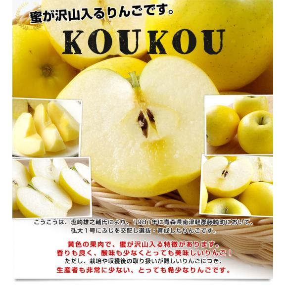 送料無料 岩手県より産地直送 JAいわて中央 こうこう 5キロ (14から20玉) 林檎 りんご リンゴ05