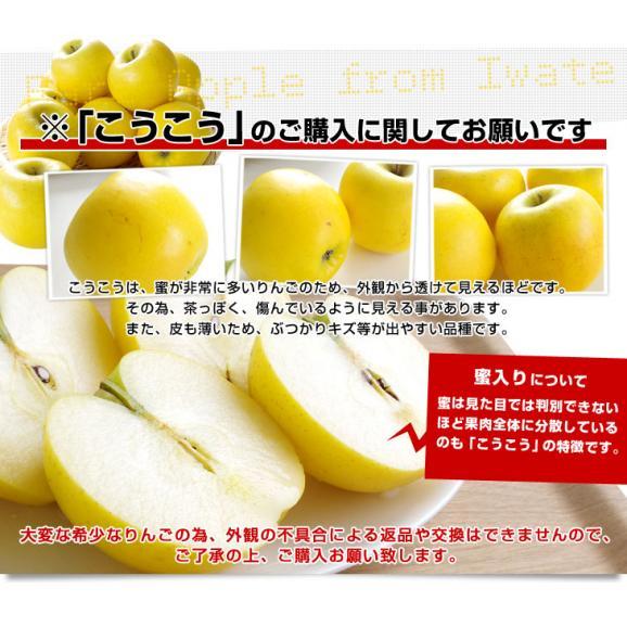 送料無料 岩手県より産地直送 JAいわて中央 こうこう 5キロ (14から20玉) 林檎 りんご リンゴ06