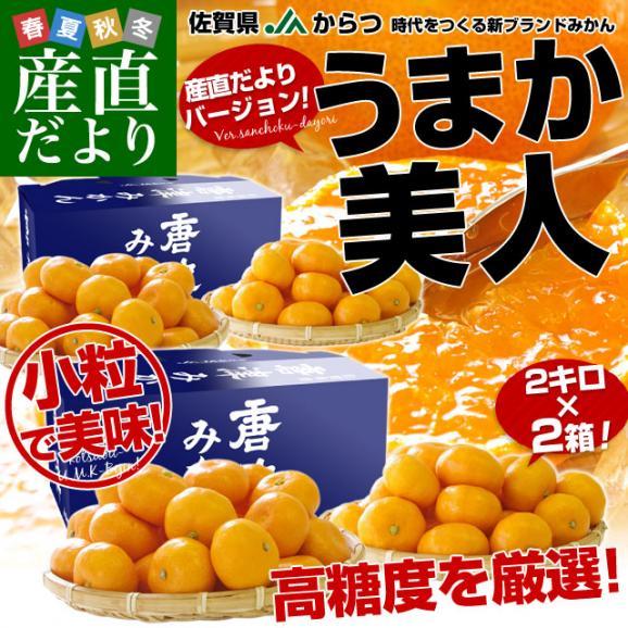 佐賀県より産地直送 JAからつ 小粒うまか美人 高糖度みかん 2Sから3Sサイズ 約2キロ×2箱 (合計80玉前後)送料無料 U・M・K美人 蜜柑 温州ミカン02
