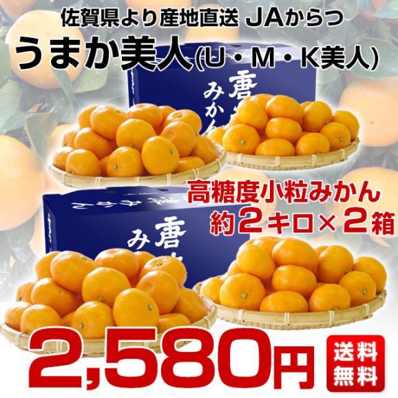 佐賀県より産地直送 JAからつ 小粒うまか美人 高糖度みかん 2Sから3Sサイズ 約2キロ×2箱 送料無料 U・M・K美人 蜜柑 温州ミカン 御歳暮 お歳暮 ギフト03