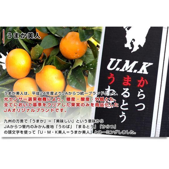佐賀県より産地直送 JAからつ 小粒うまか美人 高糖度みかん 2Sから3Sサイズ 約2キロ×2箱 (合計80玉前後)送料無料 U・M・K美人 蜜柑 温州ミカン05
