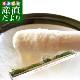 送料無料 佐賀県より産地直送 JAからつ 自然薯 Lサイズ 1本入 約1キロ 化粧箱 じねんじょ 山芋 やまいも