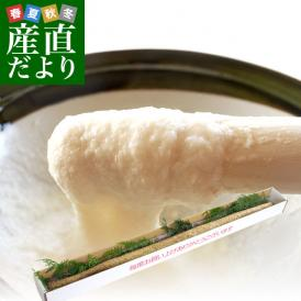 佐賀県より産地直送 JAからつ 自然薯 Lサイズ 1本入 約1キロ 化粧箱 じねんじょ 山芋 やまいも 送料無料