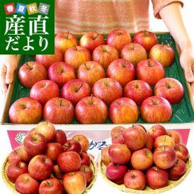 青森県より産地直送 JAつがる弘前 サンふじリンゴ 小玉 青秀 10キロ (46玉から56玉) 送料無料 りんご 林檎