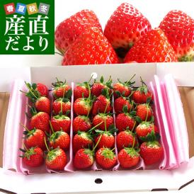 香川県を代表する高品質いちご!食感・甘味・酸味!まさに絶妙なバランス!