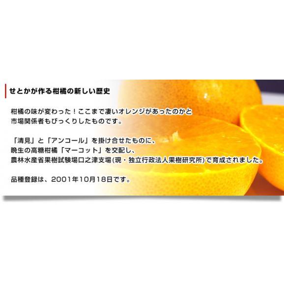 佐賀県より産地直送 JAからつ せとか 訳あり Mから2Lサイズ 5キロ箱 送料無料 (18玉から32玉前後) 唐津05