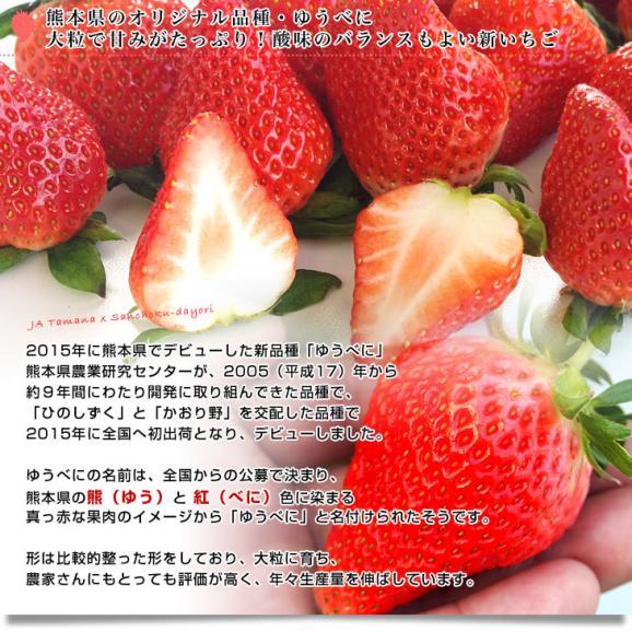 熊本県より産地直送 熊本県JAたまな 新品種のいちご 「ゆうべに」 秀品 2Lから3Lサイズ 540g(270g×2P)  送料無料 苺 イチゴ 玉名市 ※クール便04
