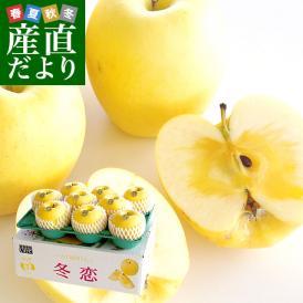 岩手県より産地直送 JA全農いわて いわて純情りんご 冬恋(品種:はるか) 約2.5キロ (7から10玉) 送料無料 林檎 りんご リンゴ
