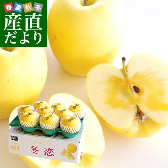 送料無料 岩手県より産地直送 JA全農いわて いわて純情りんご 冬恋(品種:はるか) 約2.5キロ (7から10玉) 林檎 りんご リンゴ01