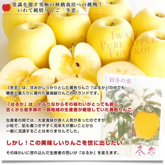 送料無料 岩手県より産地直送 JA全農いわて いわて純情りんご 冬恋(品種:はるか) 約2.5キロ (7から10玉) 林檎 りんご リンゴ04