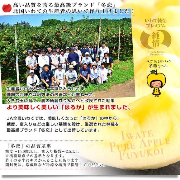 送料無料 岩手県より産地直送 JA全農いわて いわて純情りんご 冬恋(品種:はるか) 約2.5キロ (7から10玉) 林檎 りんご リンゴ05