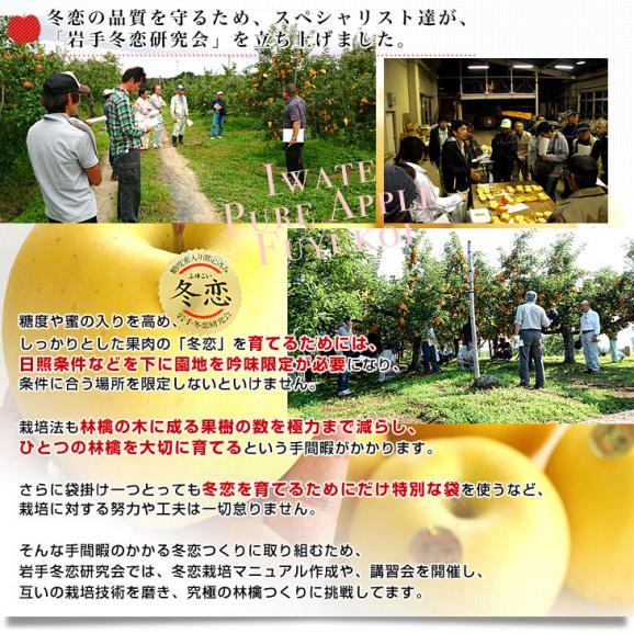送料無料 岩手県より産地直送 JA全農いわて いわて純情りんご 冬恋(品種:はるか) 約2.5キロ (7から10玉) 林檎 りんご リンゴ06