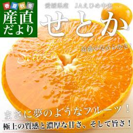 送料無料 愛媛県産 JAえひめ中央 せとか Mから2L  5キロ(20から32玉前後)柑橘 せとか オレンジ 市場スポット