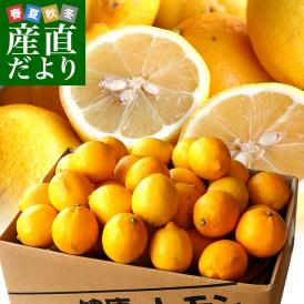 香川県から産地直送 JA香川県 完熟レモン 約5キロ (40玉から50玉前後) 送料無料  柑橘 檸檬 国産レモン