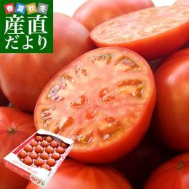 送料無料 茨城県より産地直送 NKKアグリドリーム スーパーフルーツトマト 9度+ A品 約3キロ (20から35玉) 高糖度トマト