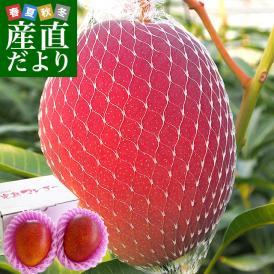 4月発送の希少な宮崎マンゴー!圧倒的美味!感動を届けます。