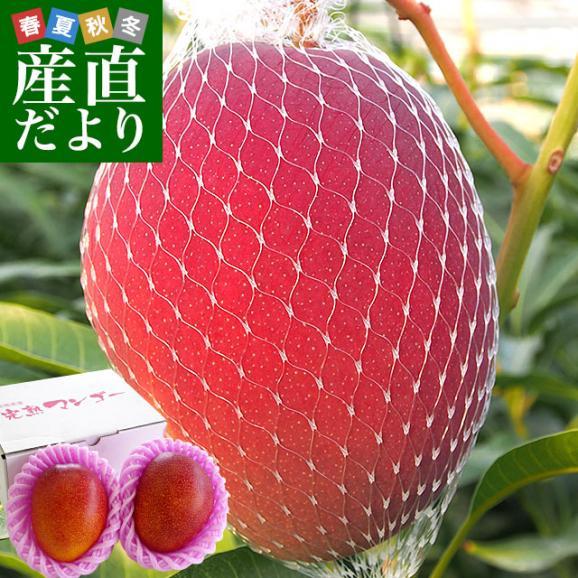 送料無料 宮崎県より産地直送 JA宮崎中央 宮崎産完熟マンゴー 大玉2L×2玉 700g以上 (350gから459g×2玉) マンゴー まんごー01