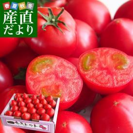 茨城県より産地直送 JAなめがたしおさい フルーツトマト キストマト Sサイズ 約1キロ(17から25玉)