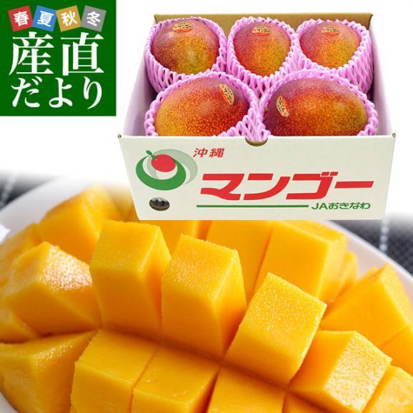 沖縄県より産地直送 JAおきなわ 完熟沖縄マンゴー 約1.5キロ (3玉から6玉入) 送料無料 まんごー アップルマンゴー01