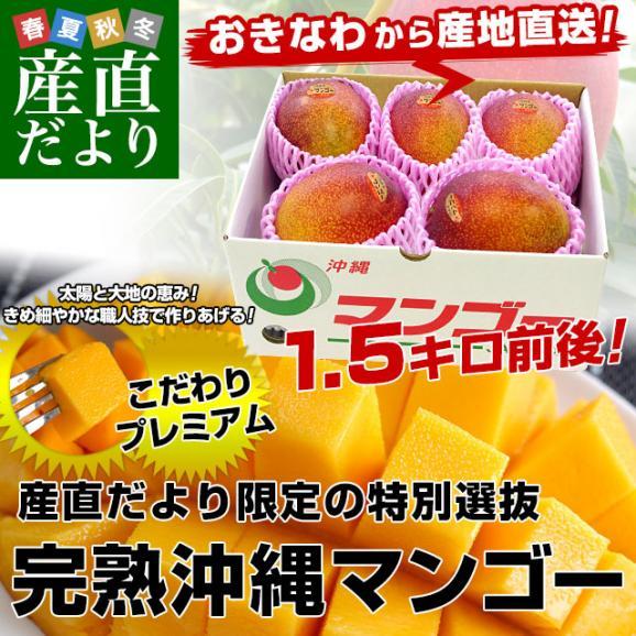 沖縄県より産地直送 JAおきなわ 完熟沖縄マンゴー 約1.5キロ (3玉から6玉入) 送料無料 まんごー アップルマンゴー02