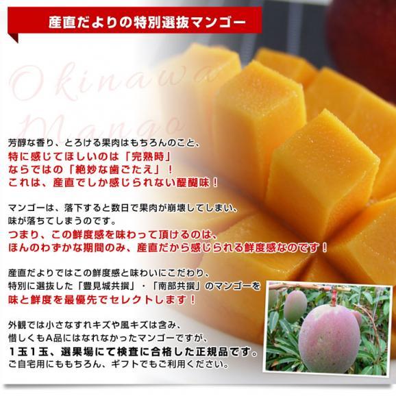 沖縄県より産地直送 JAおきなわ 完熟マンゴー 約1.5キロ (3玉から6玉入)  送料無料 まんごー アップルマンゴー 沖縄マンゴー04