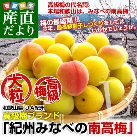 送料無料 和歌山県産 JA紀州 みなべの南高梅  Lサイズ 10キロ 市場発送