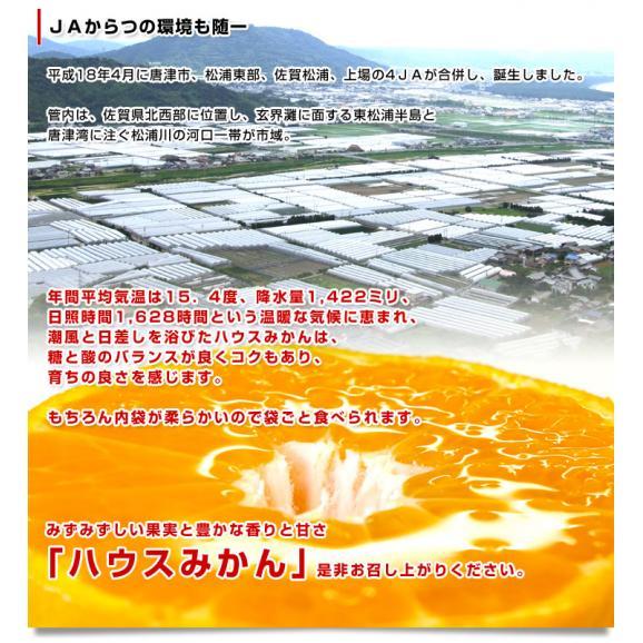 送料無料 佐賀県より産地直送 JAからつ ハウスみかん 秀品 Sサイズ 1キロ(12玉入) 化粧箱 ミカン 蜜柑06
