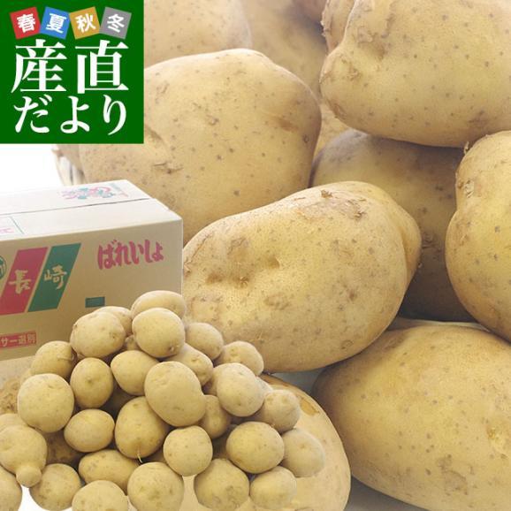 送料無料 長崎県産 JA全農ながさき じゃがいも(ニシユタカ) Lサイズ 10キロ 市場発送 馬鈴薯 ばれいしょ01