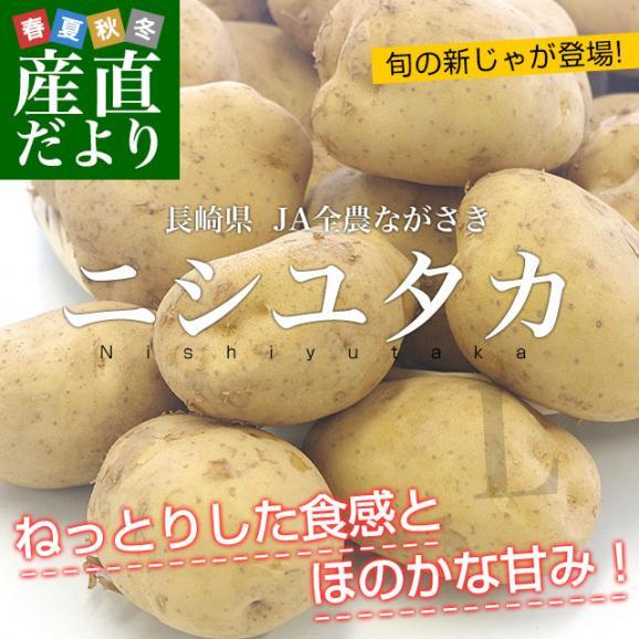 送料無料 長崎県産 JA全農ながさき じゃがいも(ニシユタカ) Lサイズ 10キロ 市場発送 馬鈴薯 ばれいしょ02