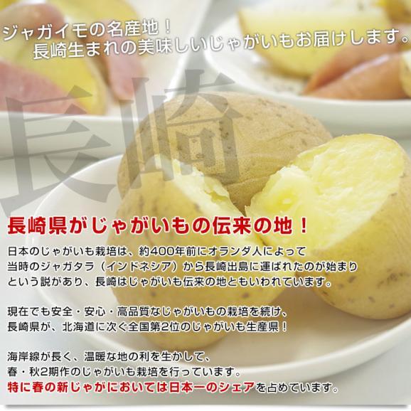 送料無料 長崎県産 JA全農ながさき じゃがいも(ニシユタカ) Lサイズ 10キロ 市場発送 馬鈴薯 ばれいしょ04