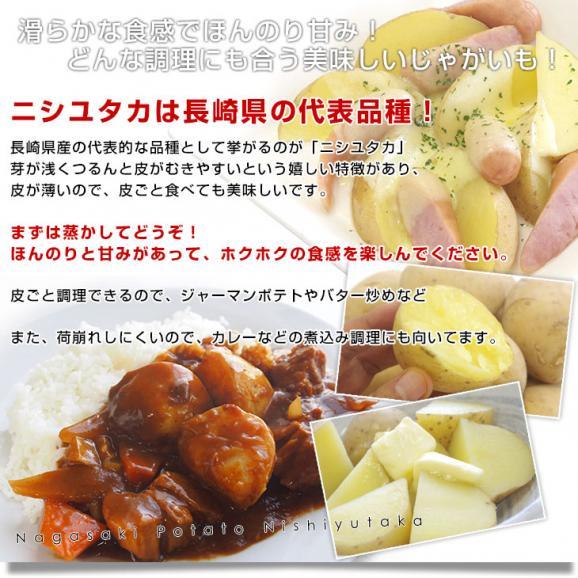 送料無料 長崎県産 JA全農ながさき じゃがいも(ニシユタカ) Lサイズ 10キロ 市場発送 馬鈴薯 ばれいしょ05