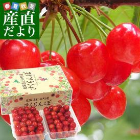 北海道フルーツ王国「仁木町」から高級佐藤錦をお届けします!