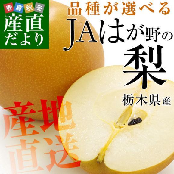 栃木県より産地直送 JAはが野の梨 (大玉限定) 優品以上 約5キロ (8玉から14玉) なし ナシ 送料無料02