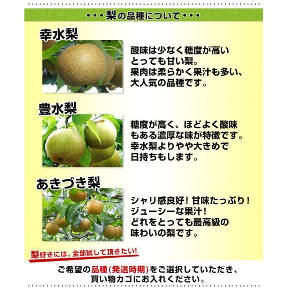 栃木県より産地直送 JAはが野の梨 (大玉限定) 優品以上 約5キロ (8玉から14玉) なし ナシ 送料無料06