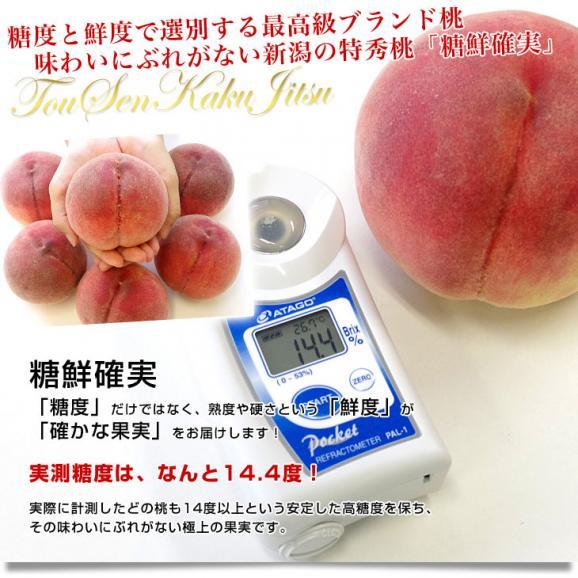 新潟県より産地直送 JAにいがた南蒲 にいがたの特秀桃「糖鮮確実 (とうせんかくじつ)」 3キロ (9玉から12玉) 送料無料 もも モモ04