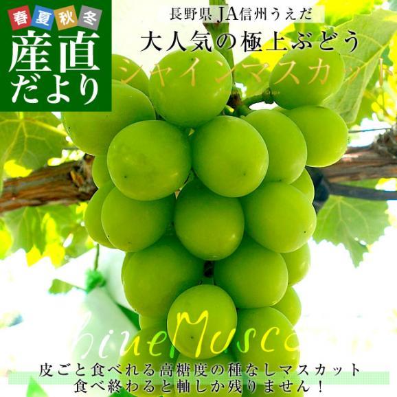 送料無料 長野県より産地直送 JA信州うえだ シャインマスカット 合計1.2キロ(大房2房入り)ぶどう 葡萄02