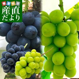 長野県より産地直送 JA信州うえだ ナガノパープルとシャインマスカット 各1房入 化粧箱 1キロ(約500g×2房) ぶどう 葡萄 ※クール便