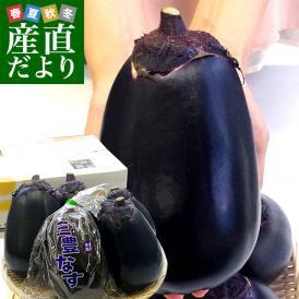 香川県から産地直送 JA香川県 巨大なナス「三豊なす」 約2キロ(4から6玉) 送料無料 茄子 なす ナス