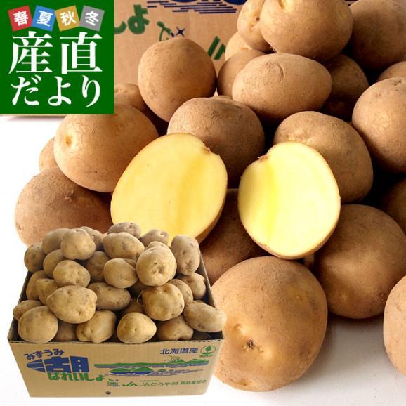 北海道から産地直送 JAとうや湖 じゃがいも 湖ばれいしょ「とうや」 Lサイズ 10キロ 馬鈴薯 ジャガイモ 送料無料01